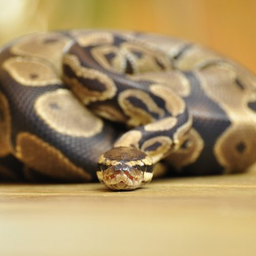 Best Humidifiers for Ball Python and Other Similar Reptiles